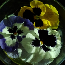 2-25_Bowl_of_Pansies_50