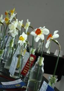 2-25_Flower_Show_Jonquils_60