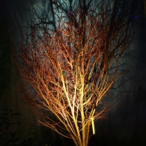 2-26_Tree-Nite_Garden_76