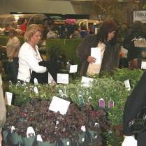 2008 Shoppers Plant Flats